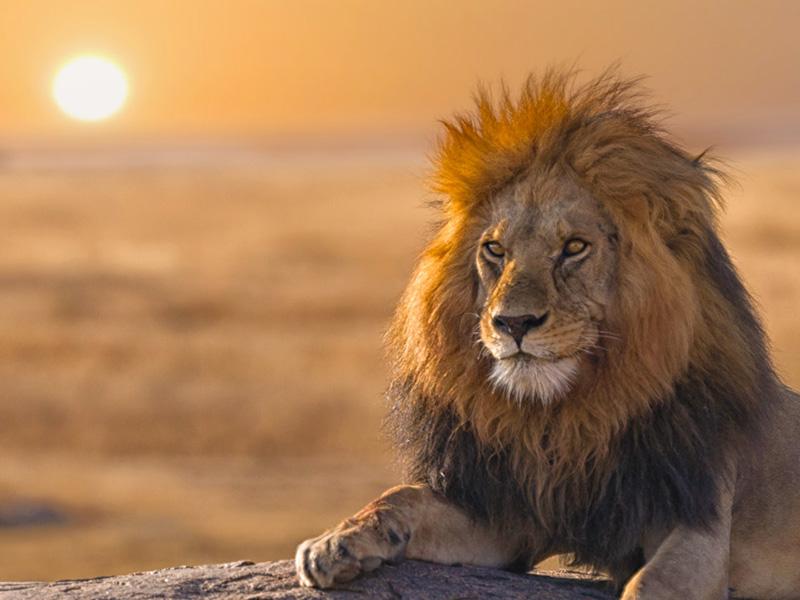 (圖3) 非洲野生動物Safari成蜜月新選擇 (圖片來源_HHtravel鴻鵠逸遊)