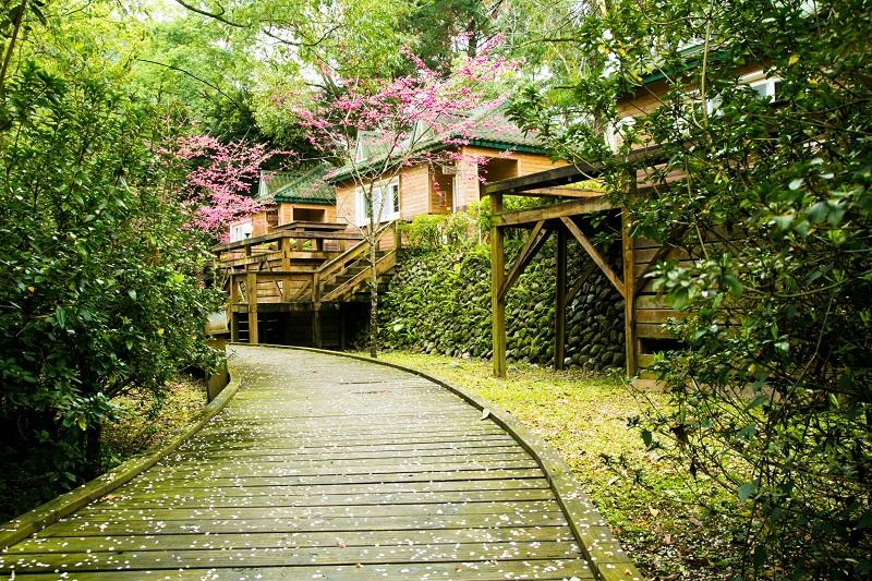 力麗明池渡假木屋櫻花步道 1