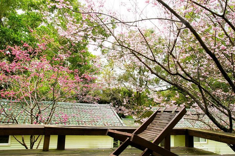 圖說-棲蘭山莊木屋外之景色 2