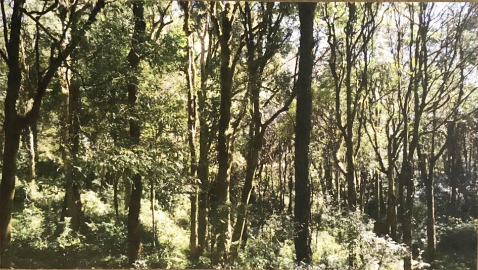 20200605 佤邦生態古樹茶 採訪_200616_0042