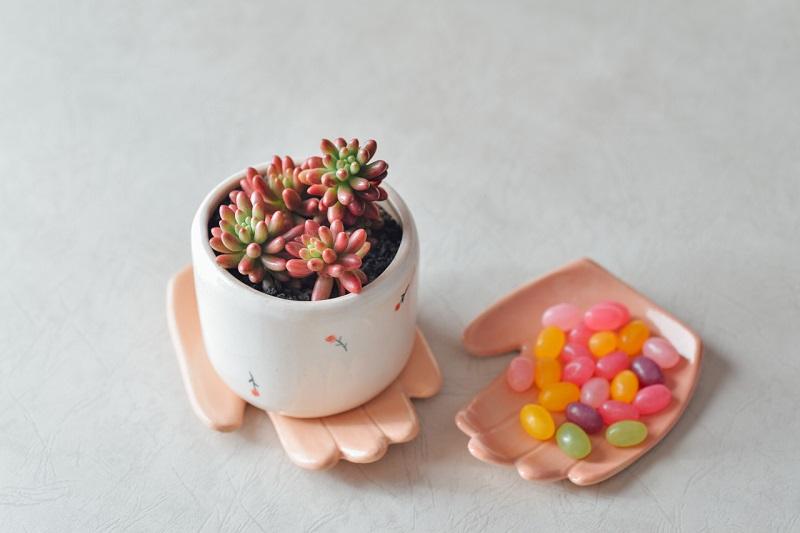 2.多肉植物-虹之玉錦