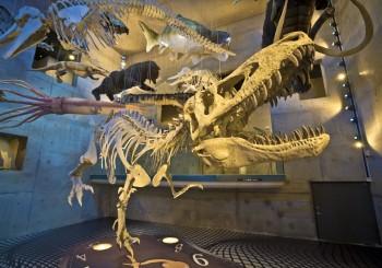 台南老爺行旅攜手全台唯一化石主題園區 推出夏季遊玩大探險