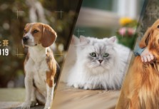 2019 Sony α系列 Instagram 動物攝影比賽 徵件超展開