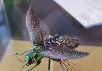 Mechanical & Creatures 機械昆蟲藝術創作展《MeCre》開啟未來的無限想像
