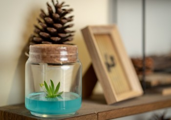 Easy Plant, Simple Life! 小室瓶栽