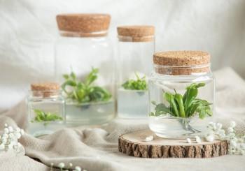 Easy Plant  擺放在家中的「迷你溫室」 讓心情心花怒放