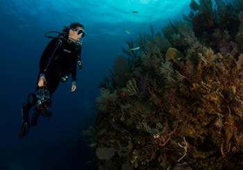 水晶x傳奇海洋探險家合作愛地球計畫
