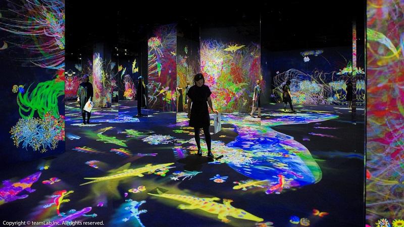 享譽國際!日本teamLab互動藝術展 今夏台北開幕